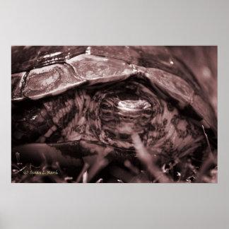 Cabeza adornada de la tortuga de madera encendido  póster