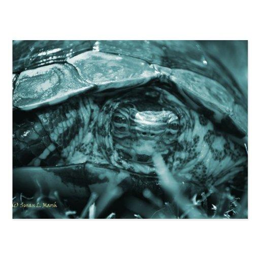 Cabeza adornada de la tortuga de madera encendido postal