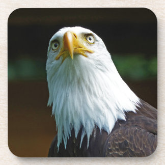 Cabeza americana de Eagle calvo Posavaso