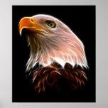 Cabeza americana de Eagle calvo Poster