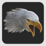 Cabeza americana de griterío de Eagle calvo Pegatinas Cuadradases