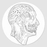 cabeza anatómica etiqueta