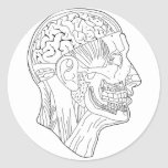 cabeza anatómica etiquetas