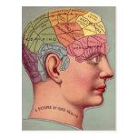 cabeza antigua de la frenología del mapa del cereb tarjeta postal