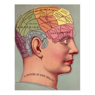 cabeza antigua de la frenología del mapa del postal