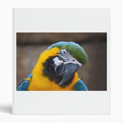 cabeza azul del macaw del loro del oro inclinada