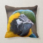 cabeza azul del macaw del loro del oro inclinada cojin