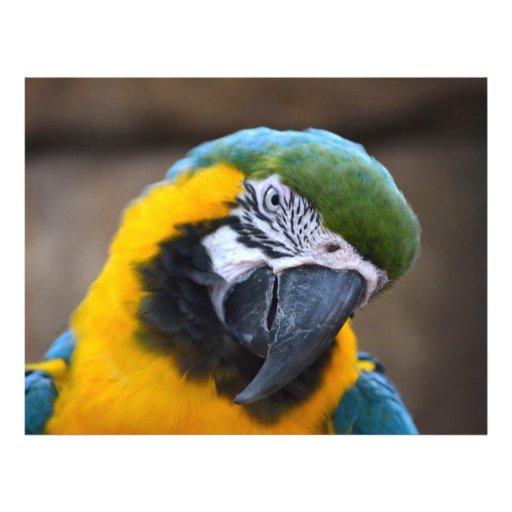 cabeza azul del macaw del loro del oro inclinada tarjeton