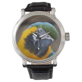 cabeza azul del macaw del loro del oro inclinada relojes de pulsera