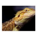 Cabeza barbuda 2 del dragón tarjetas postales