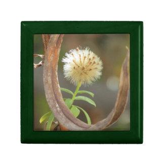 Cabeza blanca de la semilla del aster de Panicle Cajas De Joyas