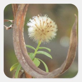 Cabeza blanca de la semilla del aster de Panicle Colcomanias Cuadradas Personalizadas