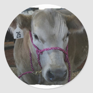Cabeza blanca de la vaca tirada en la feria del pegatinas redondas