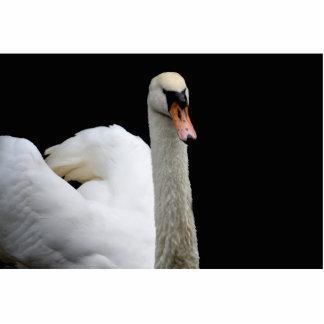 cabeza blanca del cisne encima de la imagen del pá esculturas fotográficas
