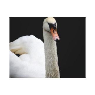 cabeza blanca del cisne encima de la imagen del pá impresión en lona