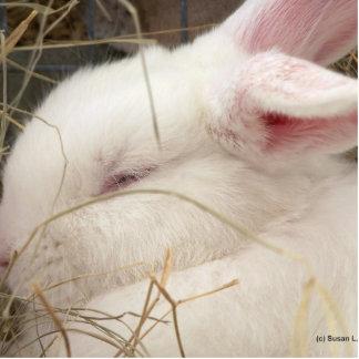 Cabeza blanca del conejo del enano del netherland  escultura fotográfica