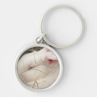 Cabeza blanca del conejo del enano del netherland  llavero personalizado
