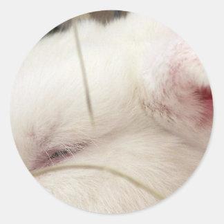 Cabeza blanca del conejo del enano del netherland etiqueta redonda