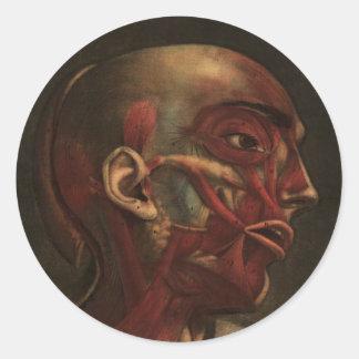 Cabeza, cuello, y hombros de la anatomía el | del pegatina redonda