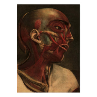 Cabeza, cuello, y hombros de la anatomía el | del tarjetas de visita grandes