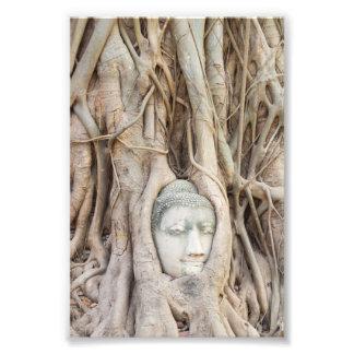 Cabeza de Buda en árbol Overgrown Impresiones Fotográficas