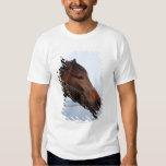 Cabeza de caballo de Brown Playera