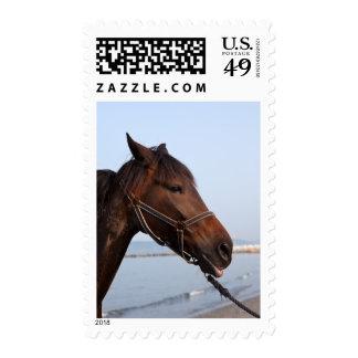 Cabeza de caballo de Brown Sello