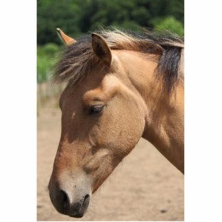 Cabeza de caballo esculturas fotograficas