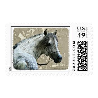 Cabeza de caballo gris sellos
