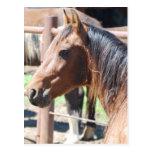 cabeza de caballo marrón postal
