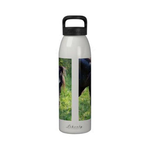 Cabeza de caballo negra con la raya blanca botella de agua reutilizable