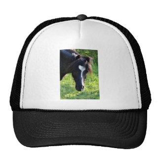 Cabeza de caballo negra con la raya blanca gorra
