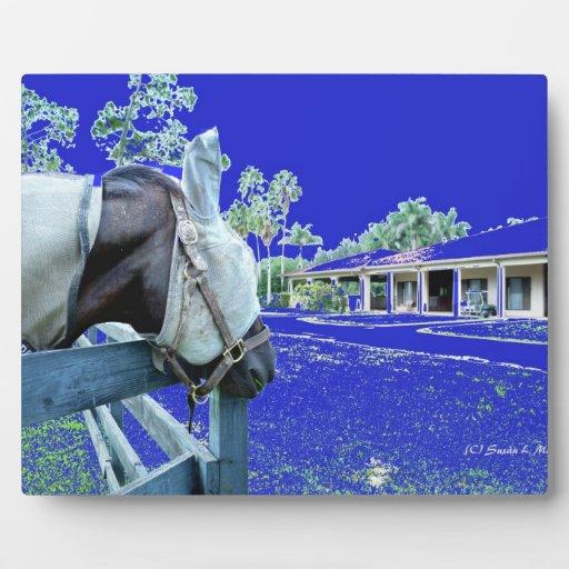cabeza de caballo sobre el azul de la cerca colore placa