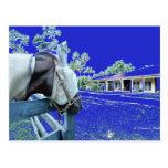 cabeza de caballo sobre el azul de la cerca colore postales