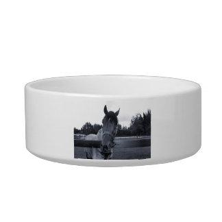 Cabeza de caballo sobre la cabeza de la cerca en e tazon para gato