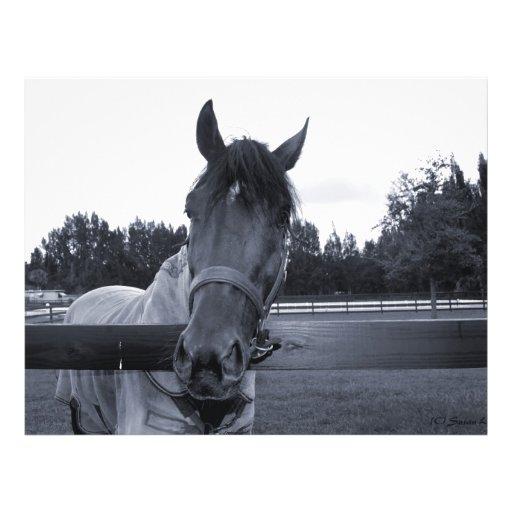 Cabeza de caballo sobre la cabeza de la cerca en e tarjetas informativas