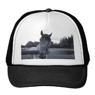 Cabeza de caballo sobre la cabeza de la cerca en e gorras de camionero