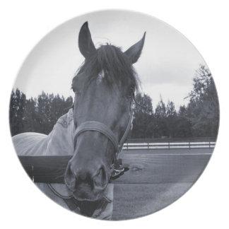 Cabeza de caballo sobre la cabeza de la cerca en e plato de comida