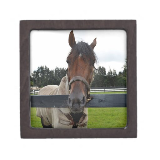 Cabeza de caballo sobre la cabeza de la cerca ence caja de joyas de calidad