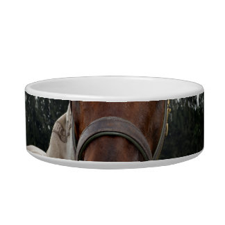 Cabeza de caballo sobre la cabeza de la cerca ence tazones para comida para gato