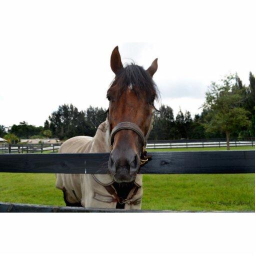 Cabeza de caballo sobre la cabeza de la cerca ence esculturas fotograficas