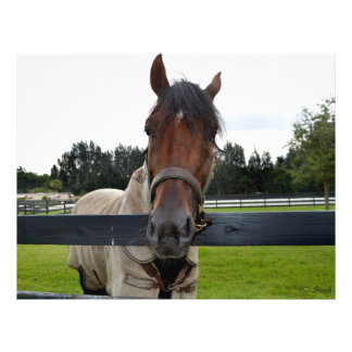 "Cabeza de caballo sobre la cabeza de la cerca ence folleto 8.5"" x 11"""