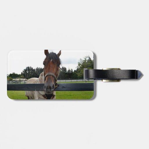 Cabeza de caballo sobre la cabeza de la cerca etiquetas para equipaje