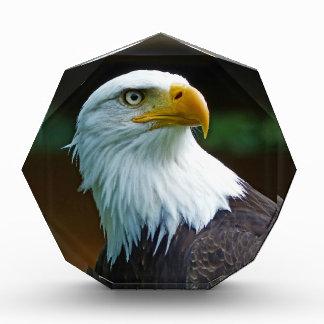 Cabeza de Eagle calvo