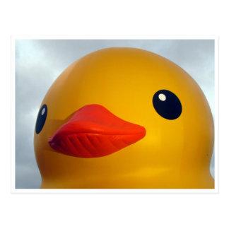 cabeza de goma del pato postales