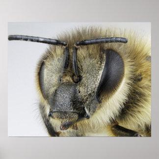 Cabeza de la abeja póster