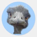 Cabeza de la avestruz etiquetas redondas