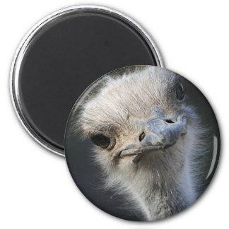 Cabeza de la avestruz imanes para frigoríficos