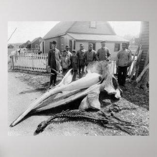Cabeza de la ballena, Alaska, 1900s tempranos Poster