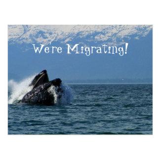 Cabeza de la ballena jorobada; Cambio de dirección Postal